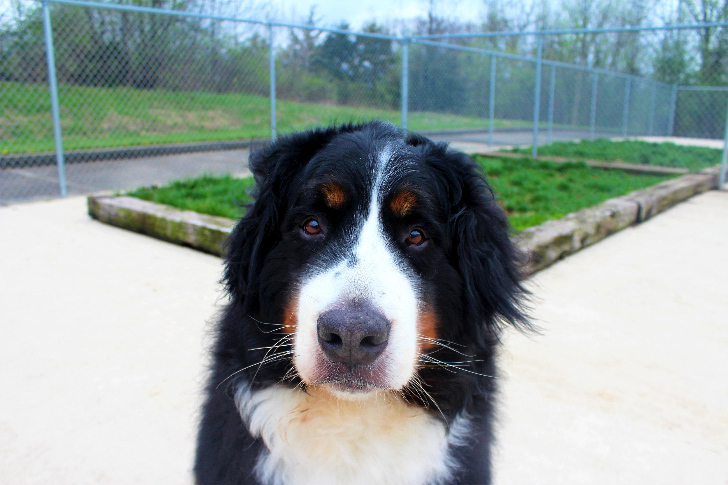 Pet Nation Lodge Boarding Dog Fiona 2