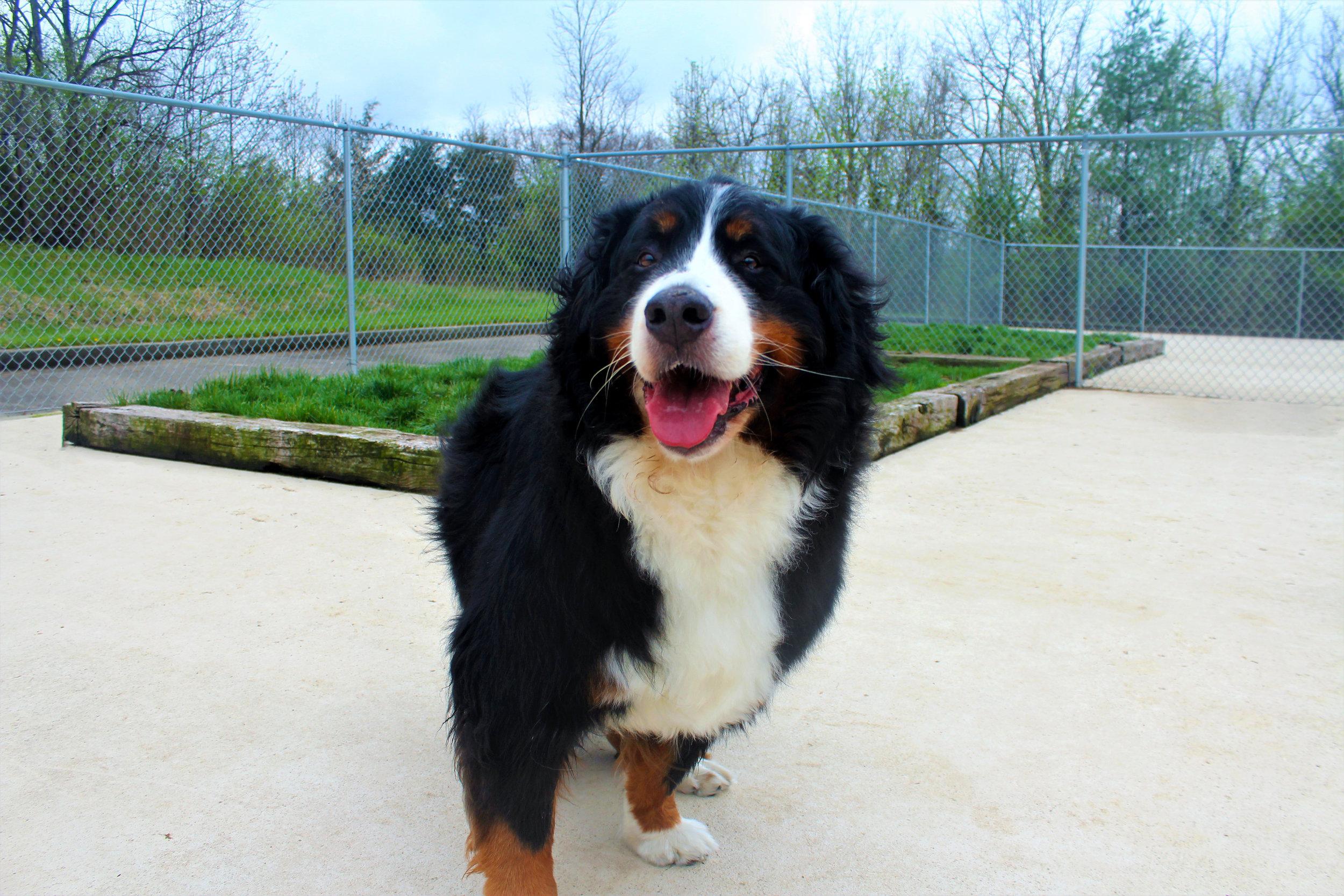 Pet Nation Lodge Daycare Dog Fiona 3