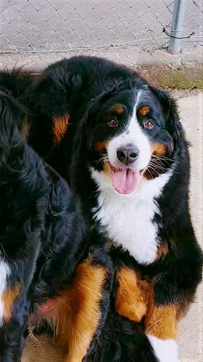 Pet Nation Lodge Boarding Dog Fiona 6