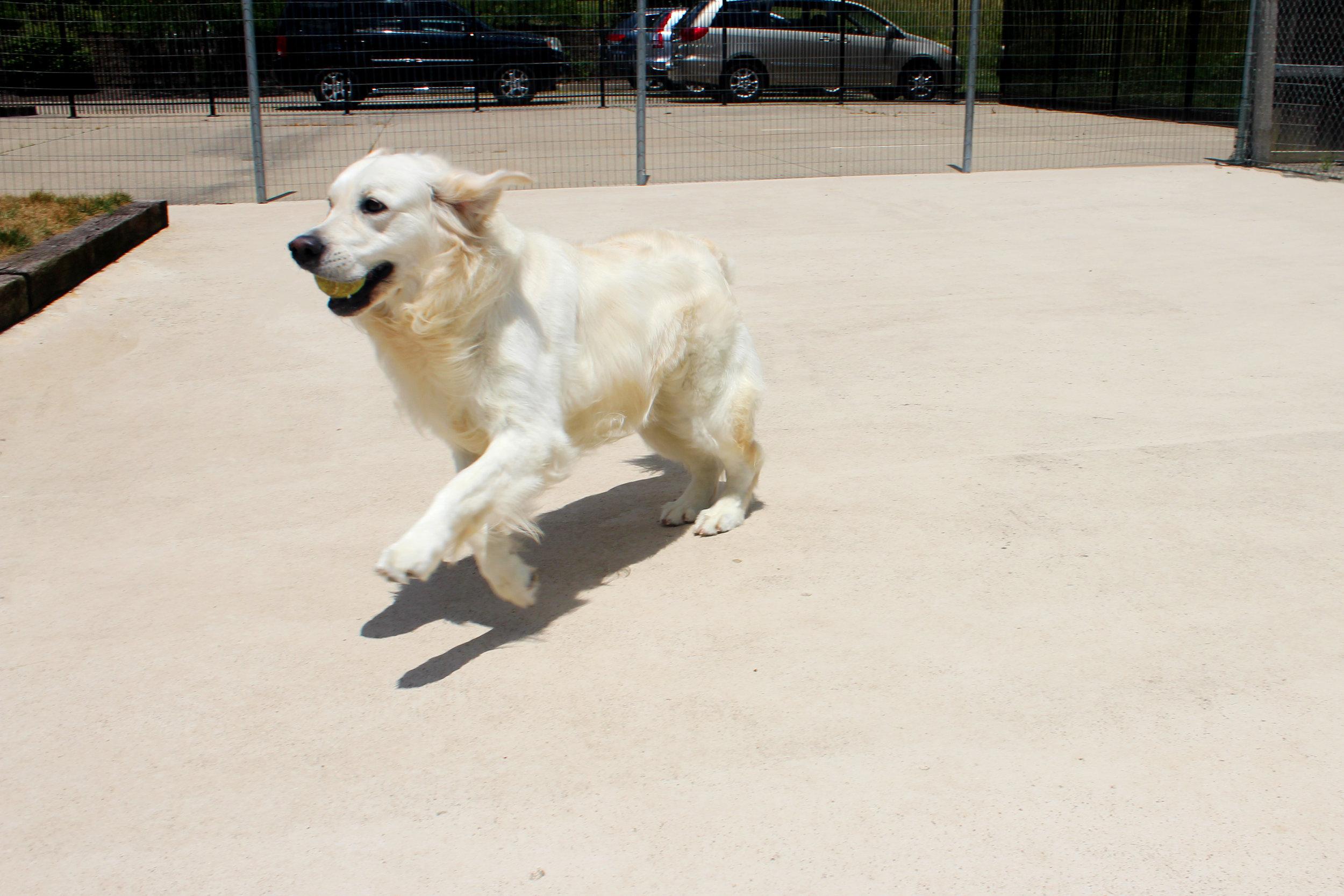 Pet Nation Lodge Boarding Dog Bianca 7