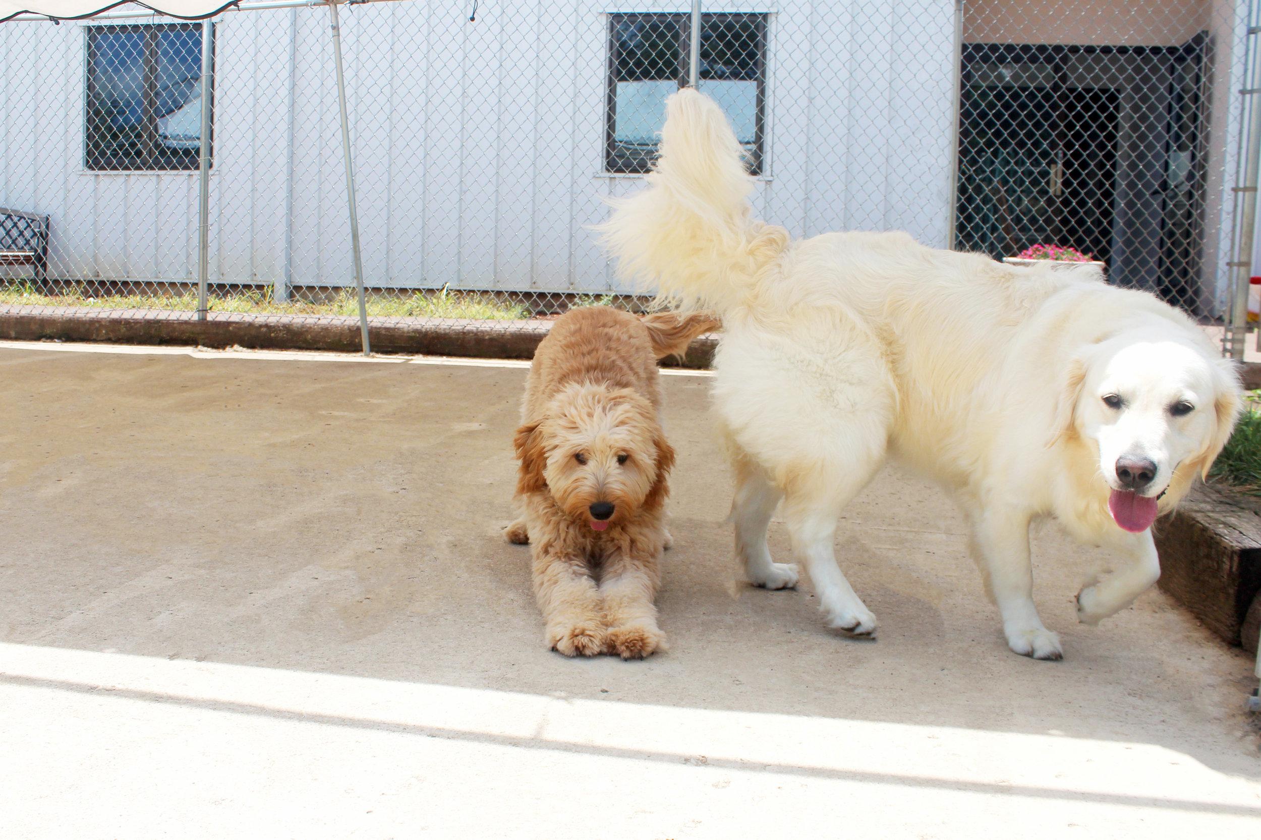 Pet Nation Lodge Daycare Dog Bianca 8