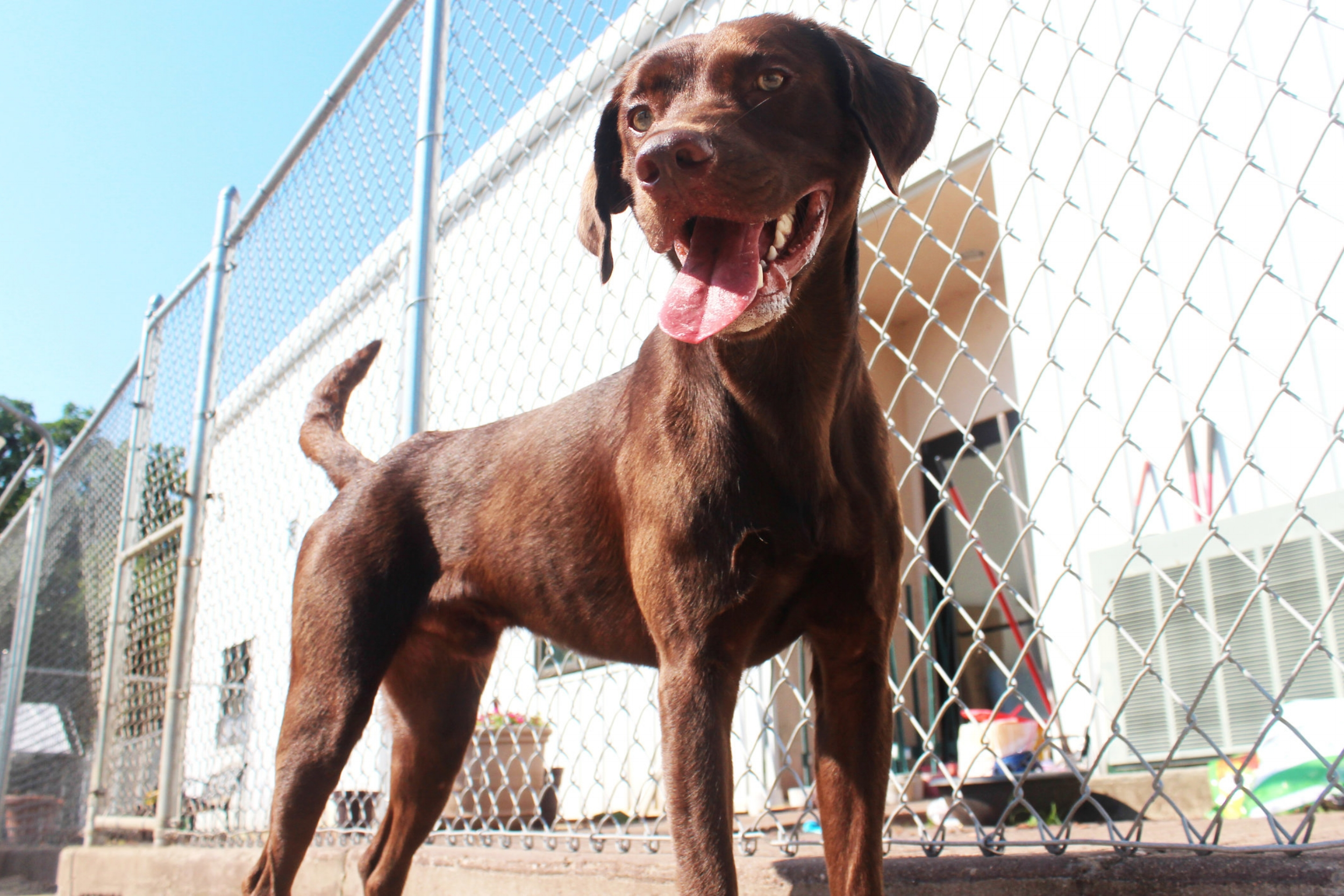 Buck will brighten your day just by looking at you. He's a form of happiness that defies the laws of physics. Buck is a wonderful array of sunlight and energy.