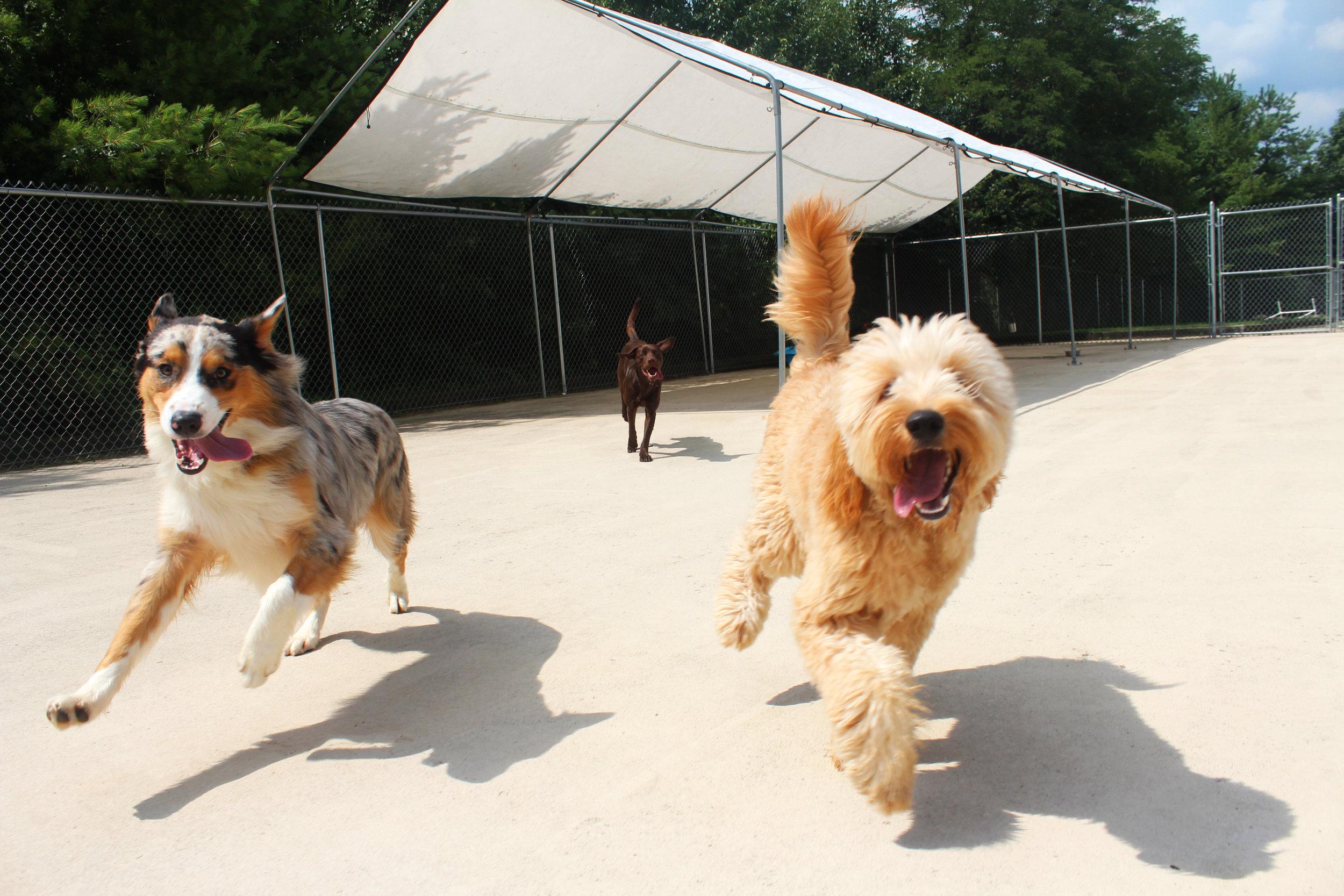 Pet Nation Lodge Boarding Dog Flash 7