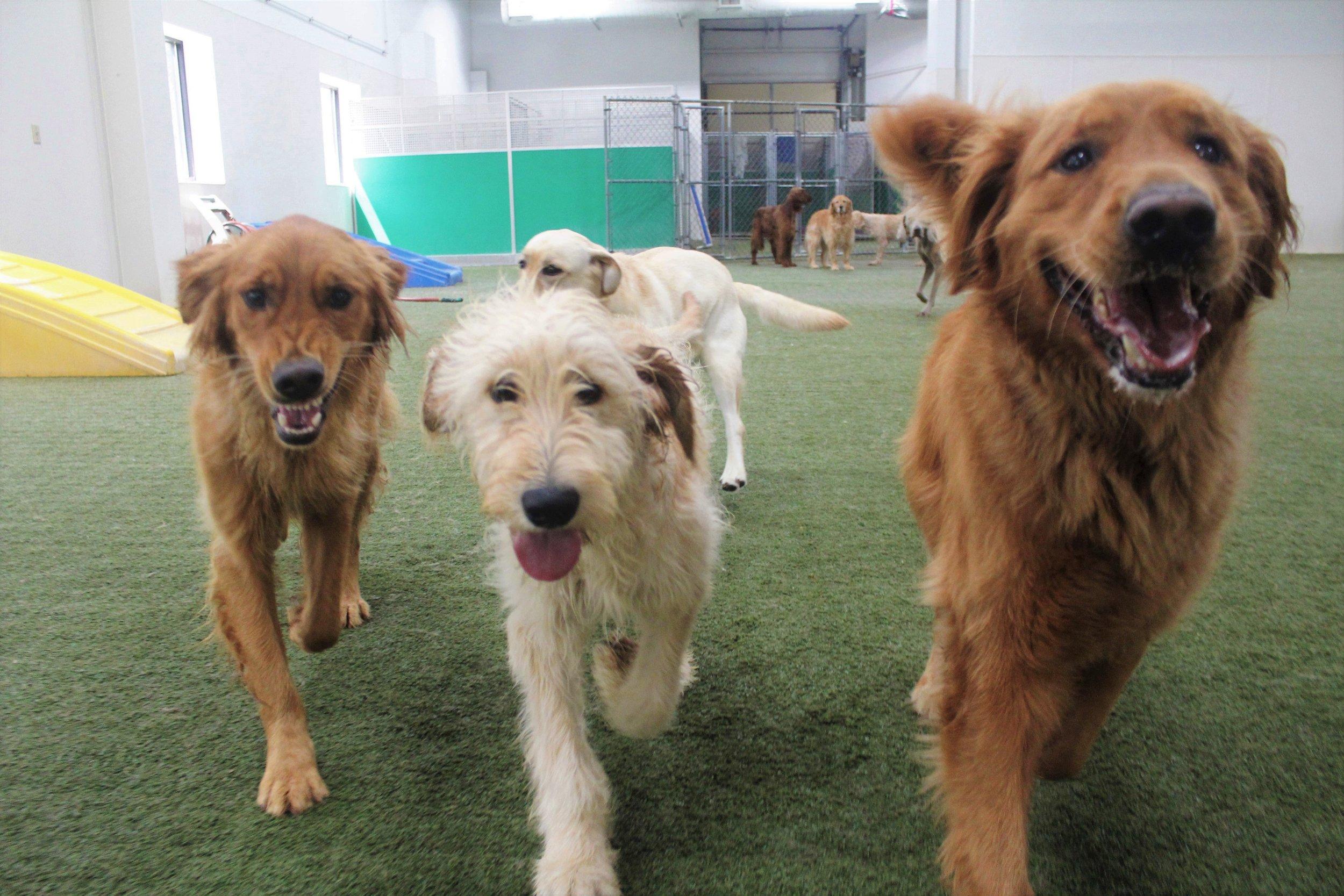 Pet Nation Lodge Boarding Dog Kobe 10