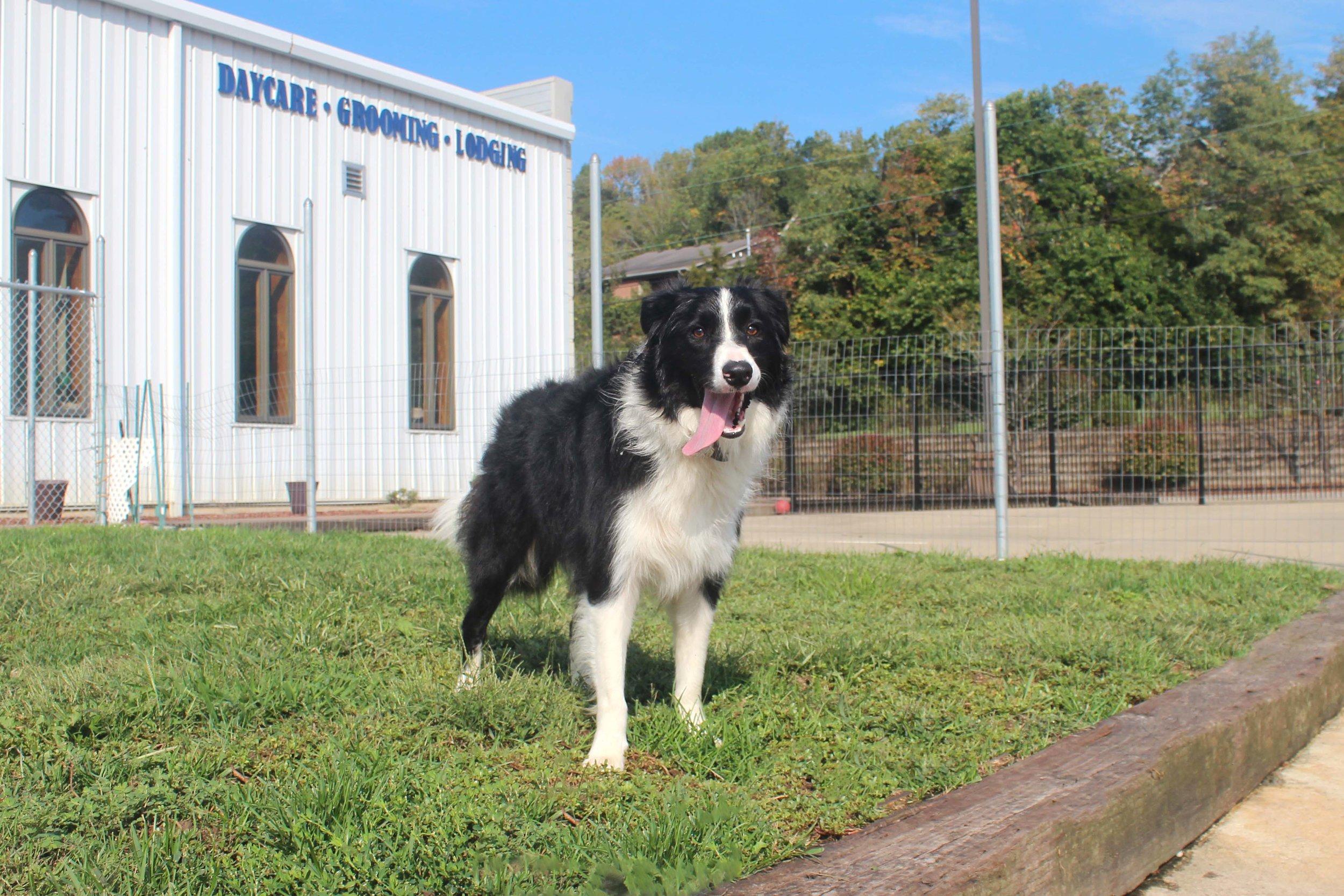 Pet Nation Lodge Boarding Dog Jetta 7