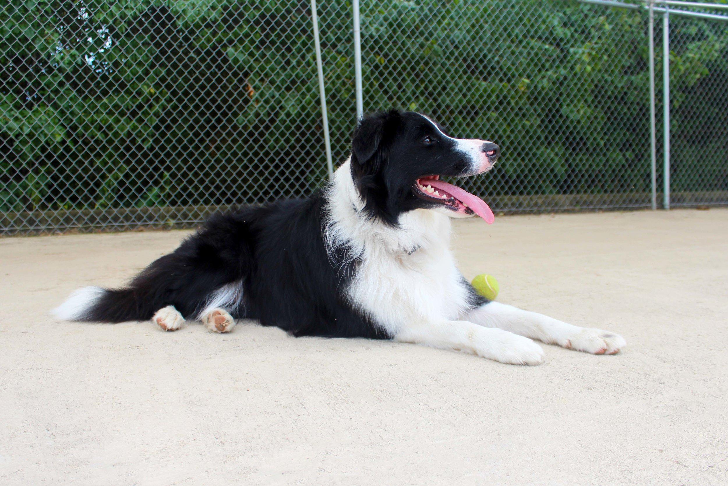 Pet Nation Lodge Daycare Dog Jetta 8