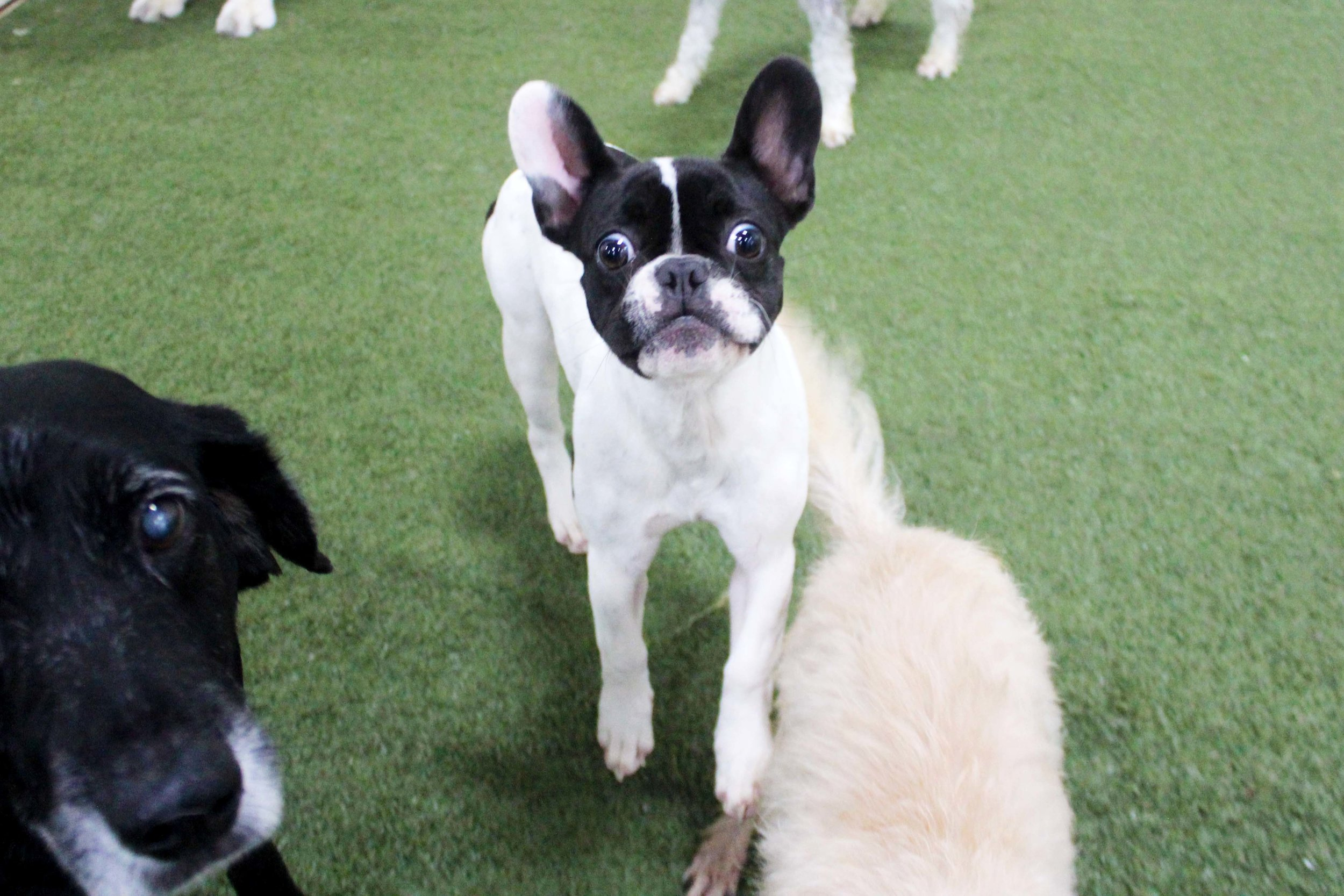 Pet Nation Lodge Boarding Dog Coco 5