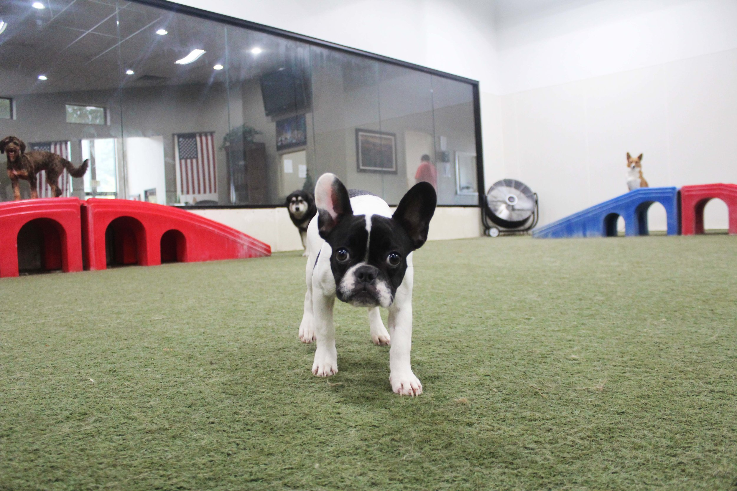 Pet Nation Lodge Daycare Dog Coco 8