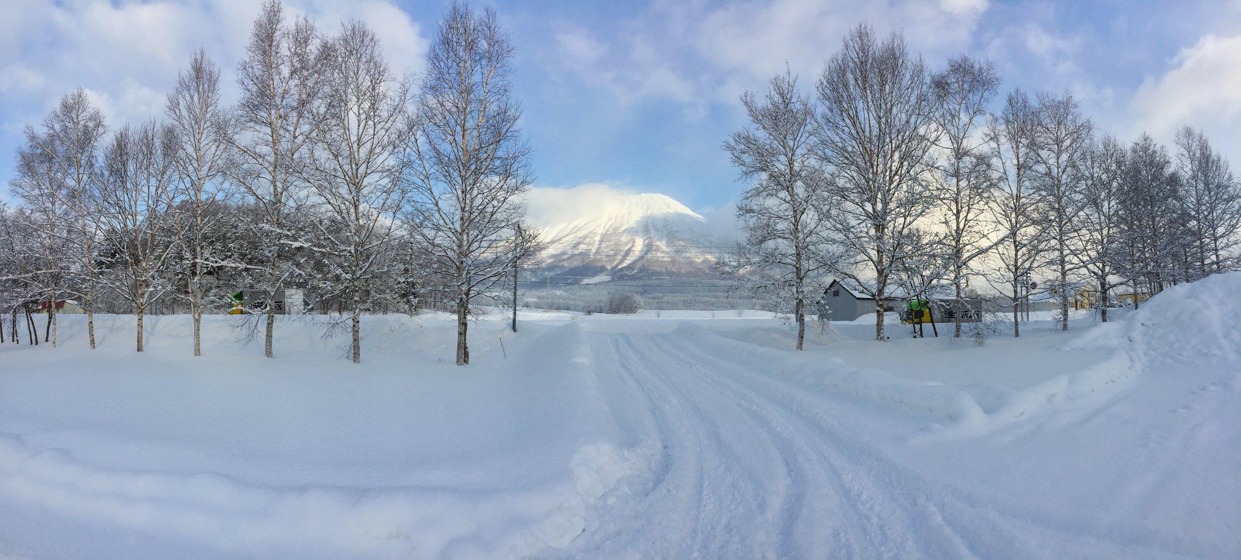 MT YOTEI.jpg