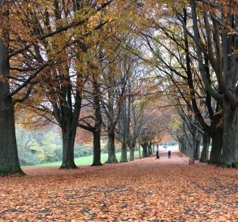 AutumnLeaves.JPG.jpg
