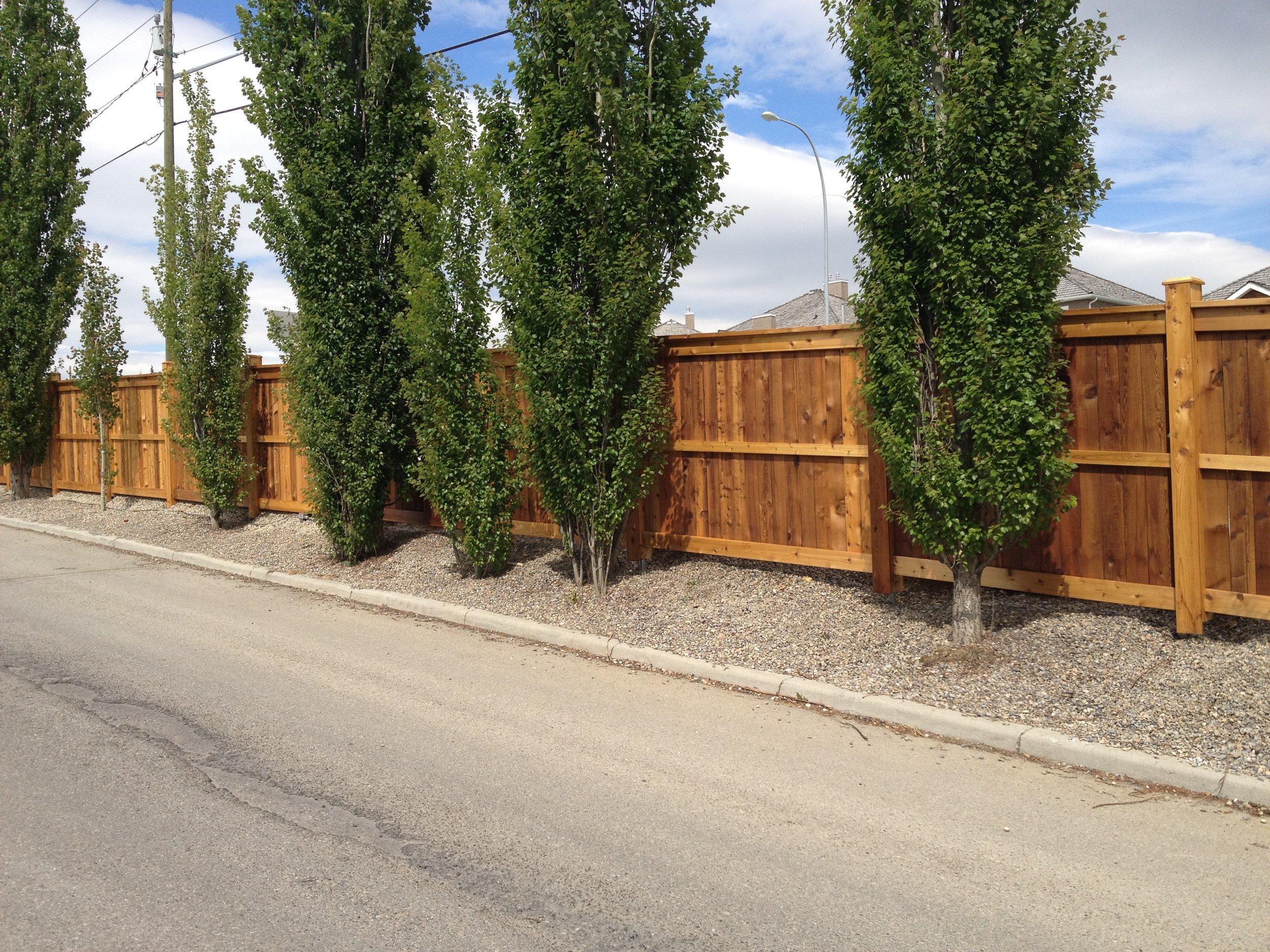 Condominium fence staining