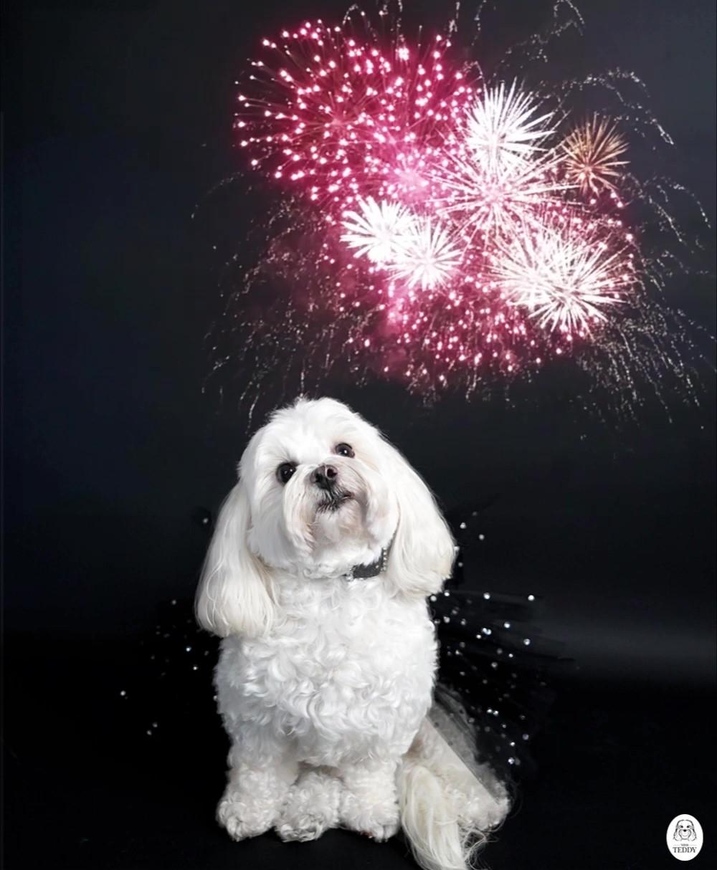 teddy fireworks_Moment.jpg