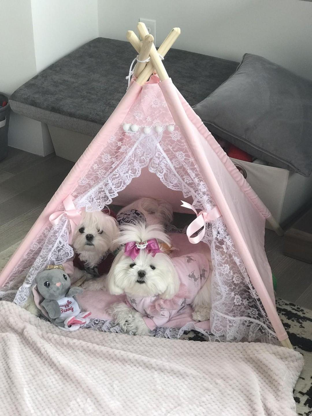 Ollie & Aggie - When Aggie saw this teepee she just had to have it. It is so beautiful and very well made. When the teepee arrived it was so amazing that I had to take over. Mommy I need a blue one just for me. Customer service is amazing and the shipping was very quick. Miss Teddy you rock!! Love, Ollie and Aggie