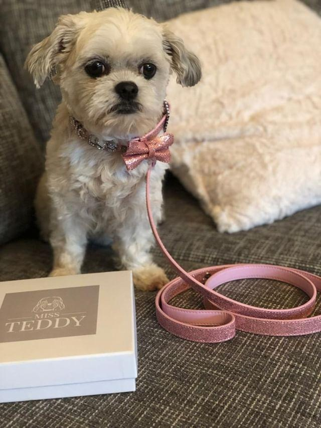 Princess - It's the first time we ordered from @missteddyuk and we really love the beautiful collar with the matching leash 💖 Look at the little details 💖There'seven my name and a little bow too💖