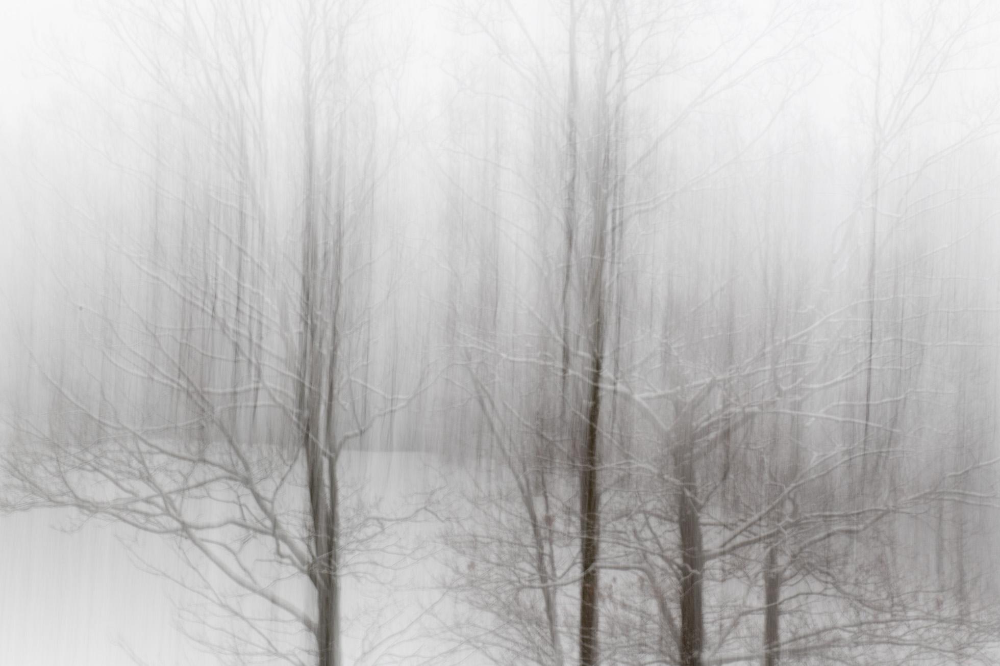 Snowy Panning _.jpg