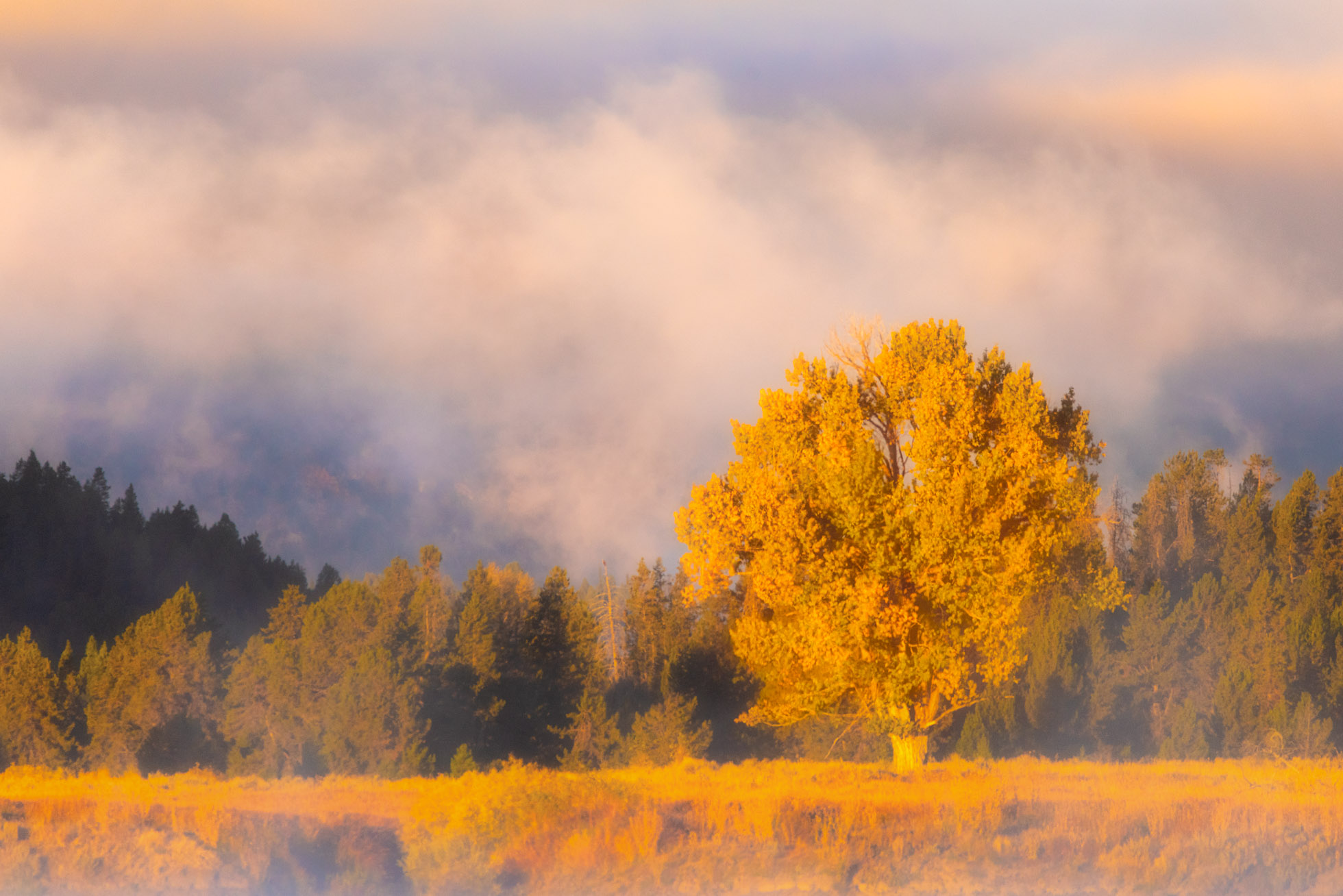 550mm  While capturing the sunrise at Oxbow Bend, I noticed the way the light was hitting this beautiful golden tree across the water. I put on my Sigma 150-600mm to isolate the tree against the background of low clouds.