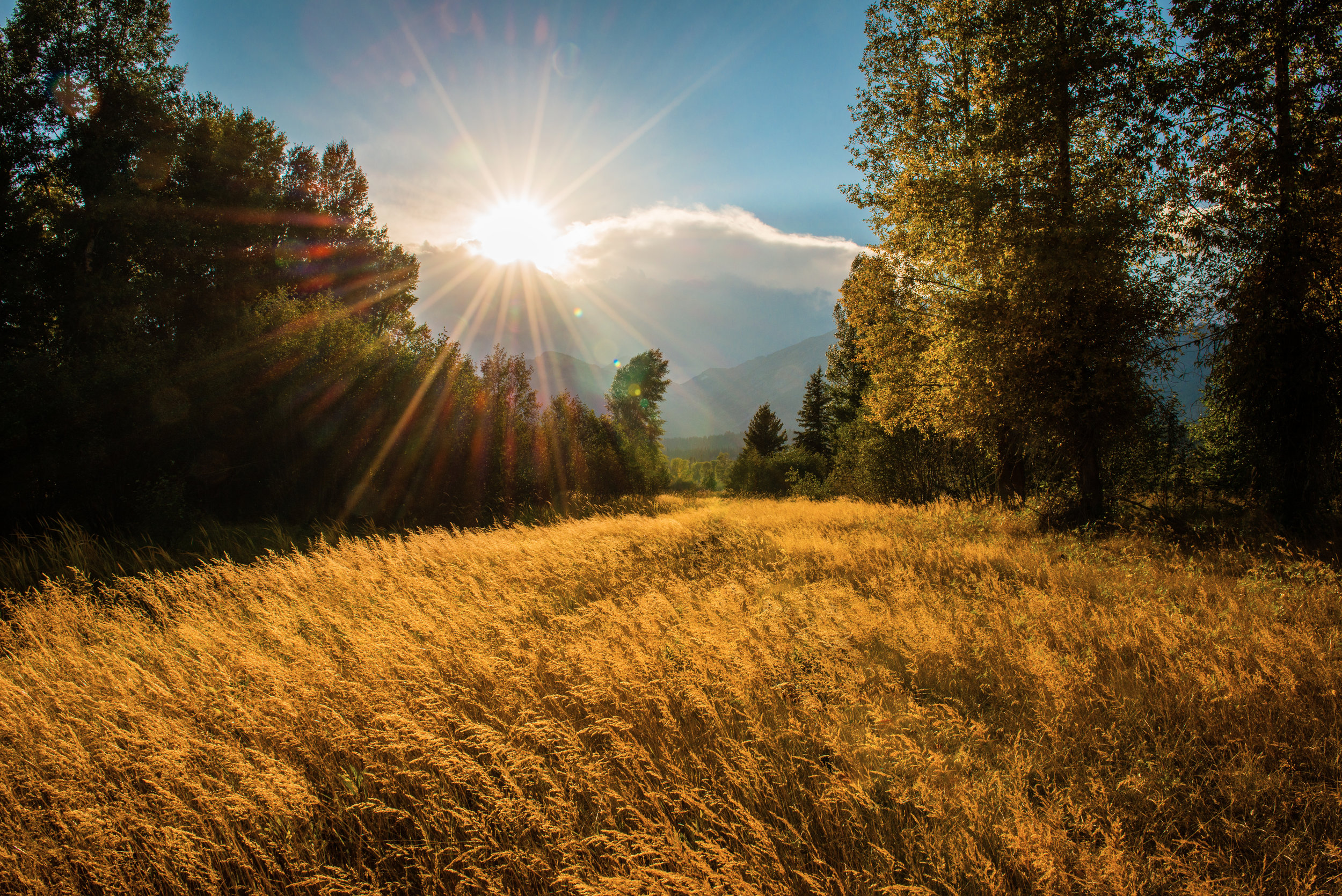 1 Golden Meadow.jpg