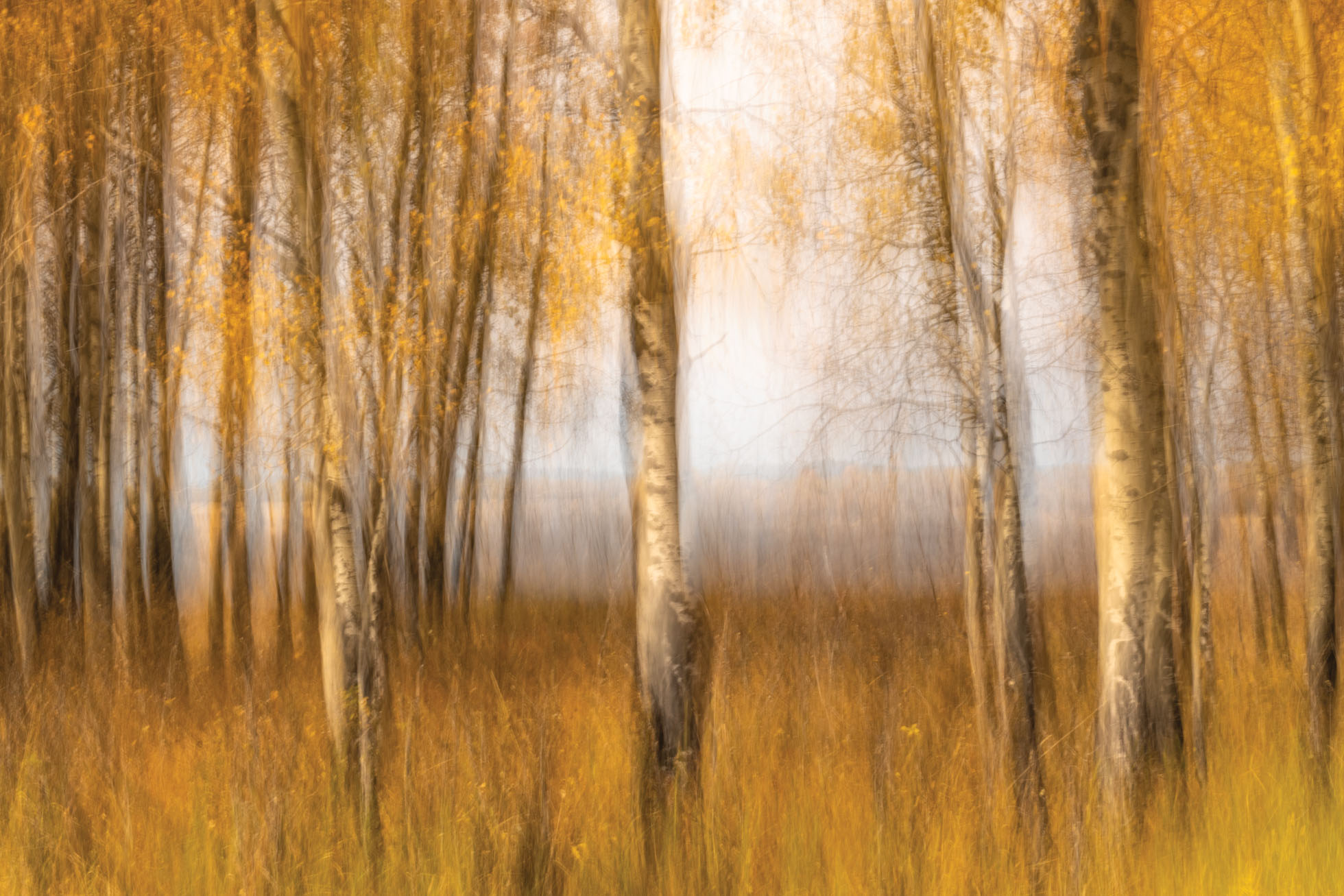 1 second exposure panning the autumn color in Grand Teton National Park using a 6 stop Neutral Density Filter