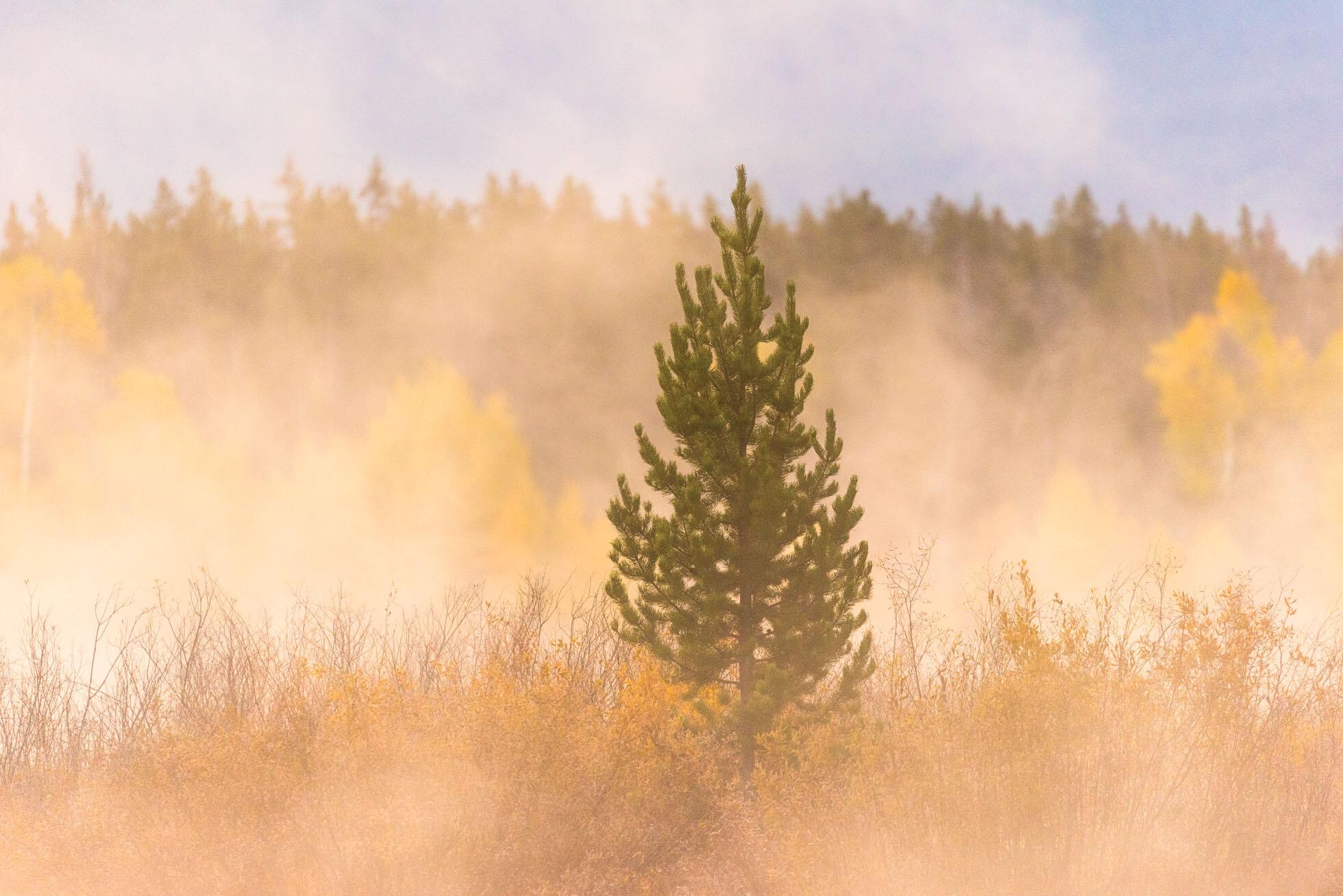Oxbow Tree & Mist-001.jpg