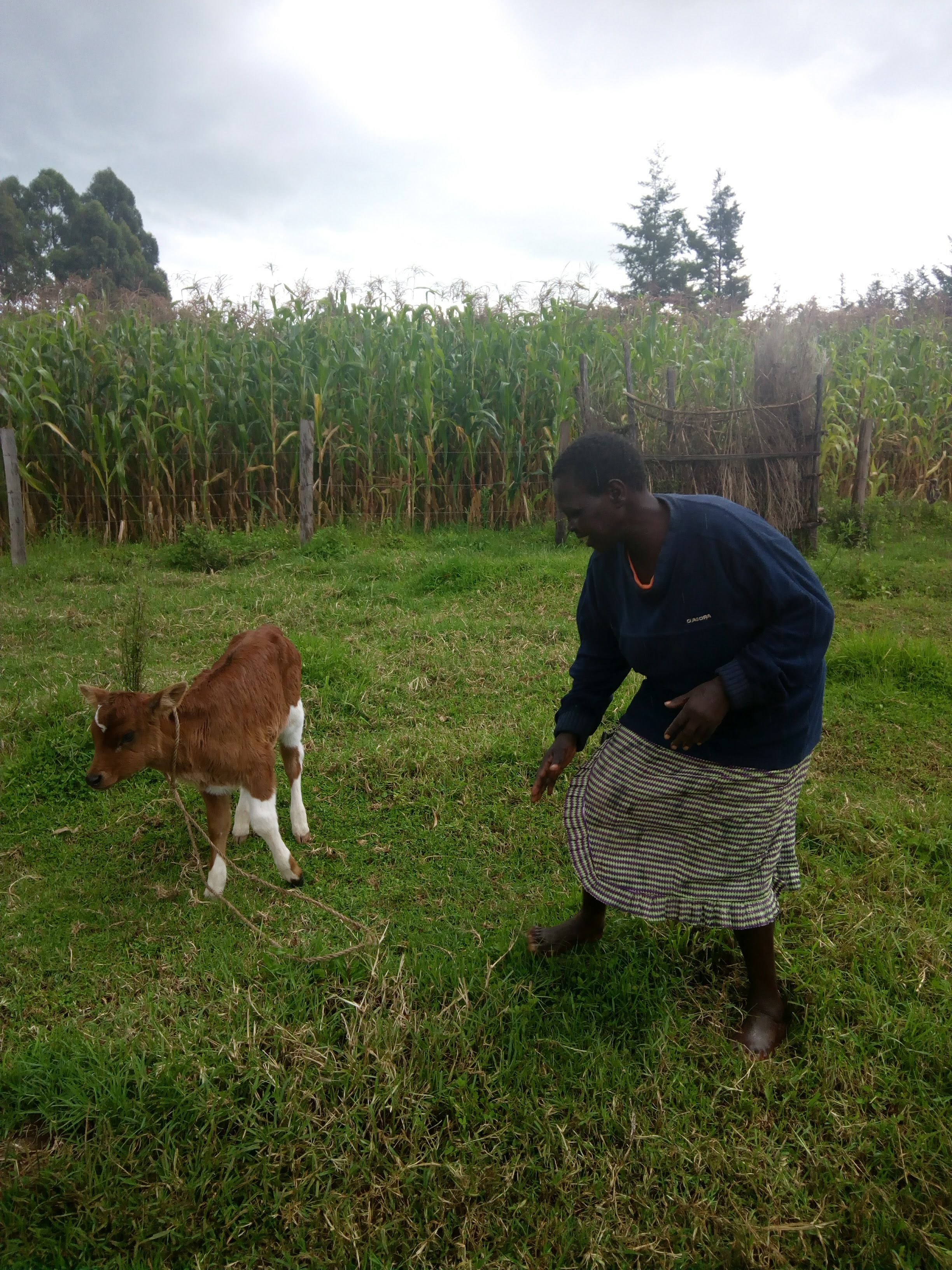 Susan with one her calves, donated through CWA's Cow Project Mission in 2013