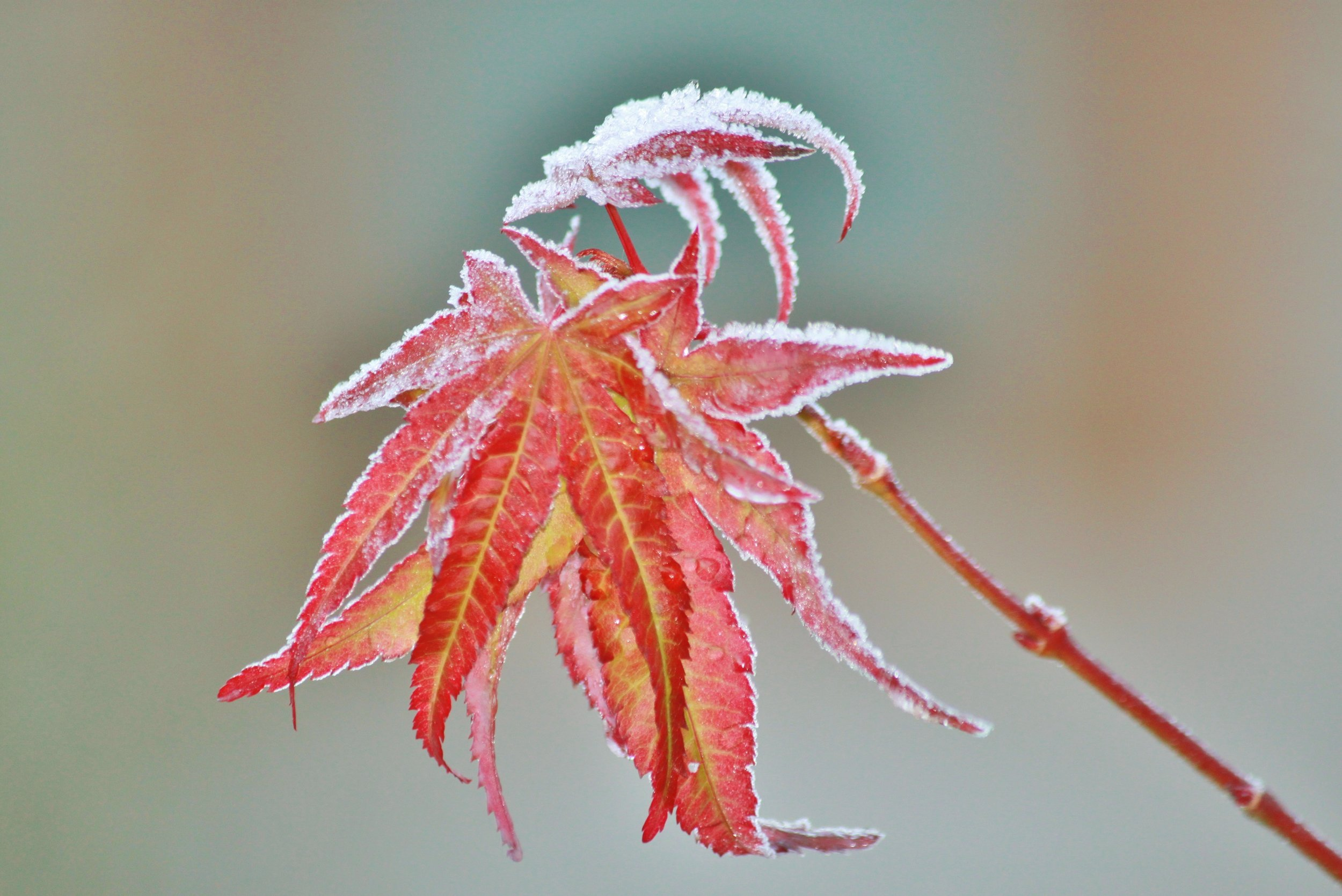 tree-nature-branch-cold-winter-plant-1057232-pxhere.com.jpg