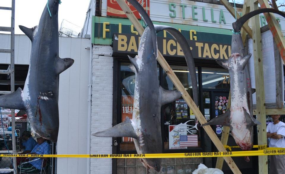 Brooklyn Shark Tournament