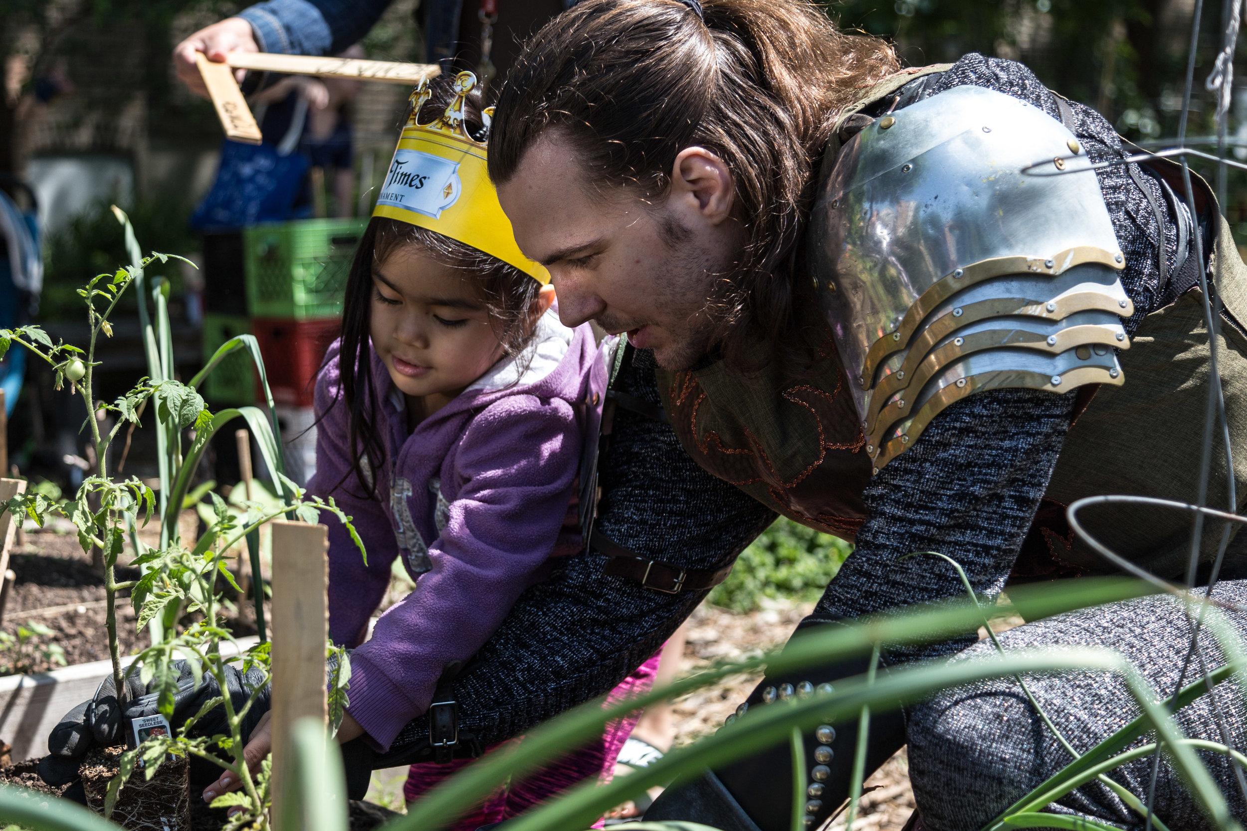 Michael Kiburz, the Green Knight, helps a preschooler plant tomatoes at the Altgeld Sawyer Corner Farm.
