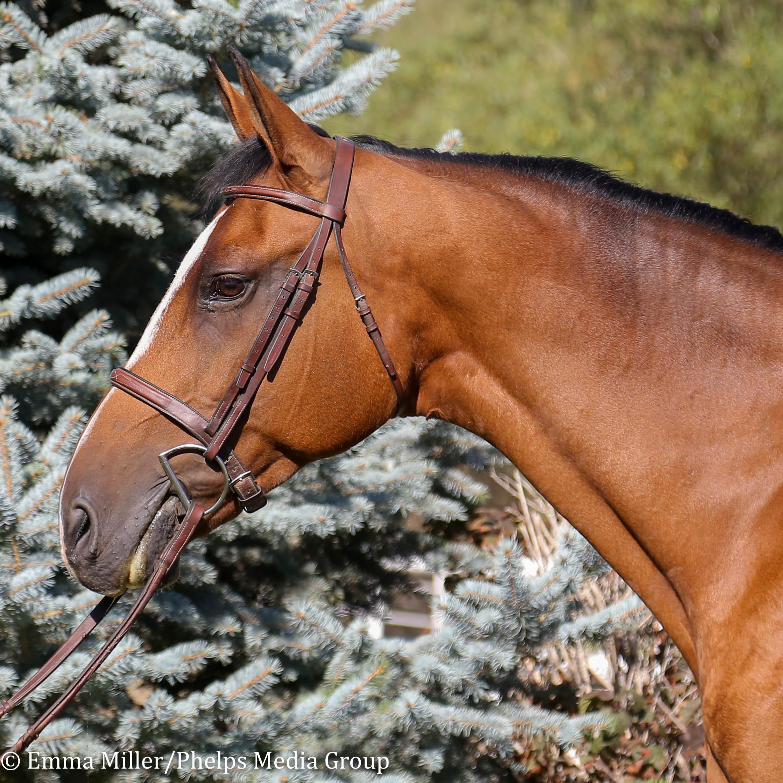 Dolce, Pony Lane Farm Photoshoot-11.jpg
