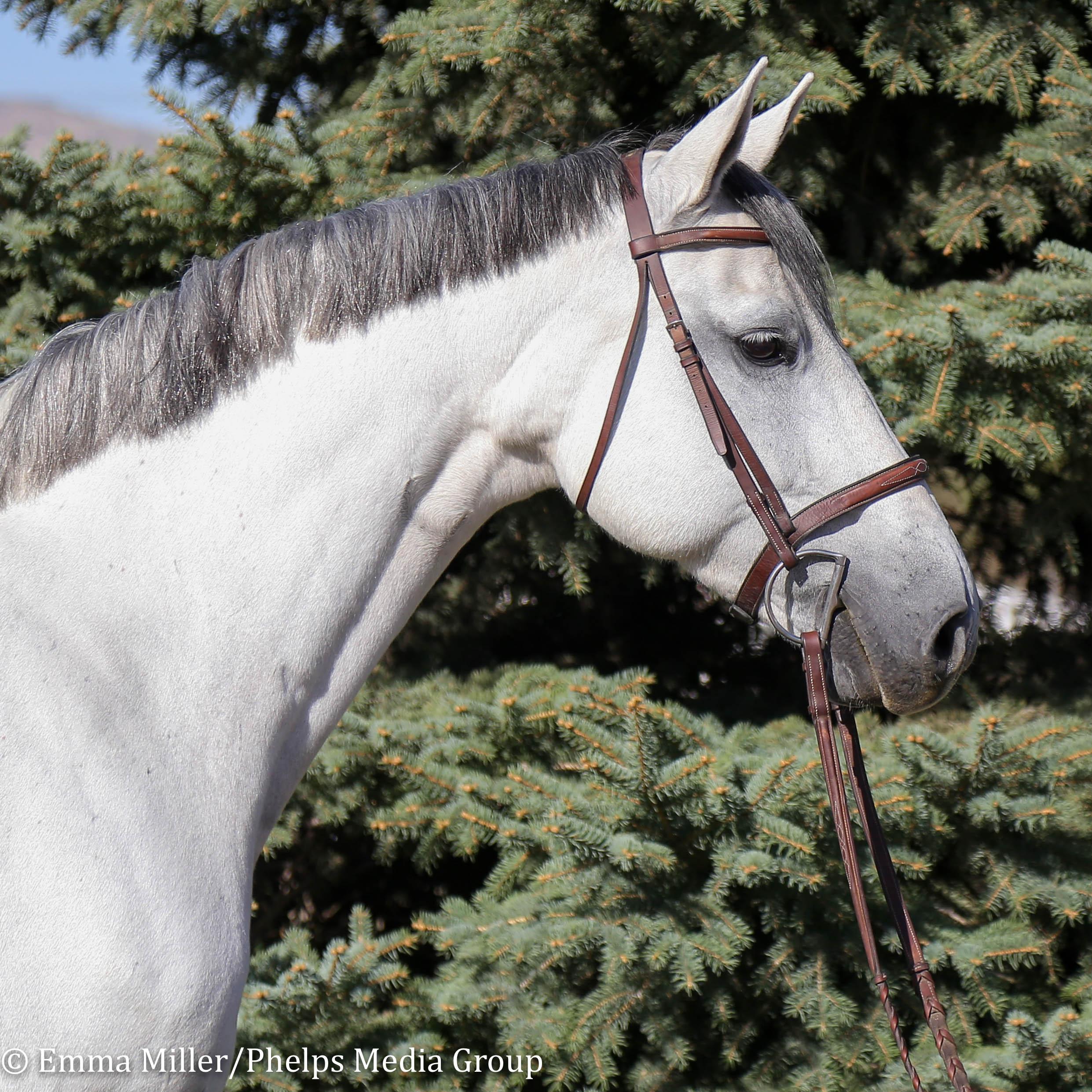 Jewel, Pony Lane Farm Photoshoot-3.jpg