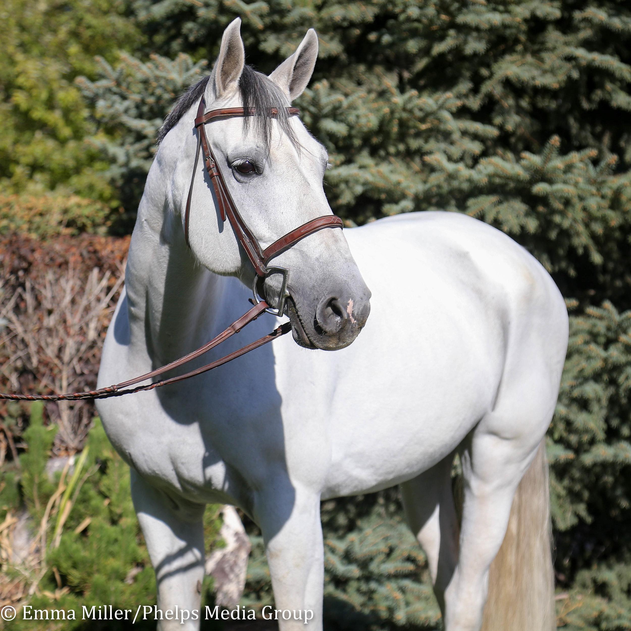 Jewel, Pony Lane Farm Photoshoot-5.jpg