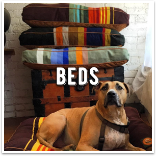 the best dog beds you will find in Marin County