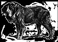 vintage-dogs_st-benard.png