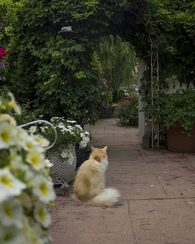 A wondrous garden, and a cat named Ice Cream. . . . Three Zero - 68. . . . . . . . . . . . . . . . . . . . #photo #photography #downtown #dailyviewvancouver #daily #vancouver #vancity #photos #photooftheday #photographer #canon #yvr #📸 #pic #canada #photo #threezero #canon #plants #canada #green #garden #cat #kitty #icecream #meow #catsofinstagram