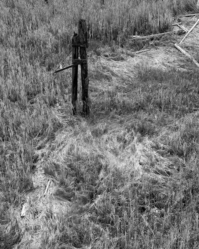 Tide Texture. . . Three Zero - 75. . . @visitrichmondbc . . . . . . . . . . . . . . . #photo #photography #downtown #dailyviewvancouver #daily #vancouver #vancity #photos #photooftheday #photographer #canon #yvr #📸 #pic #canada #photo #threezero #canon #art #canada #commodore #vancouverartgallery #richmondartgallery #bnw #richmond #water #nature