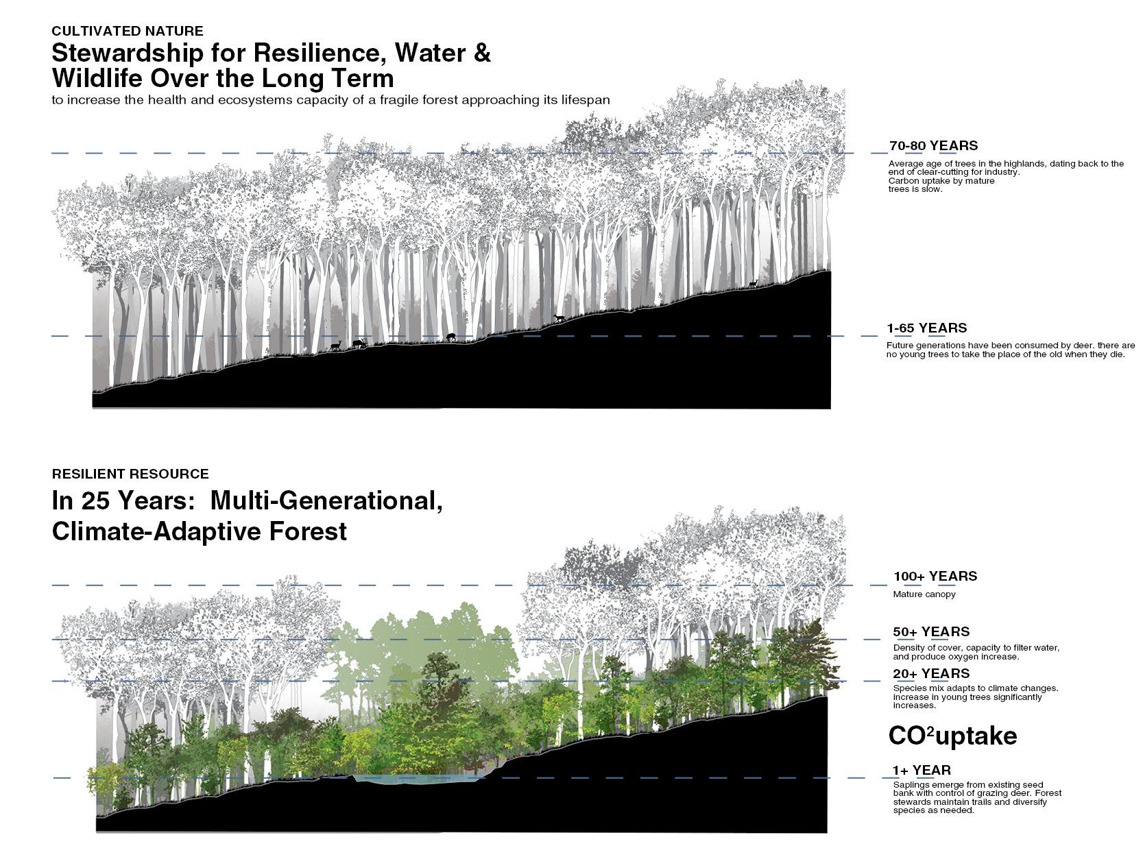 forest_carbon.jpg