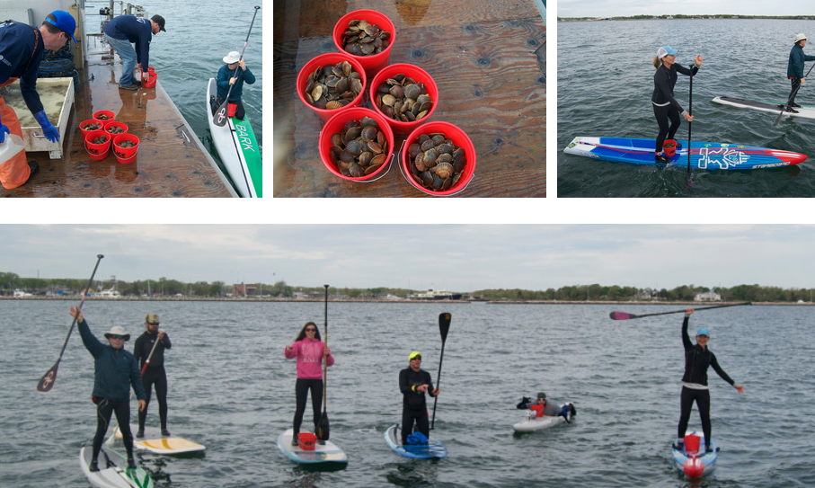 GPR Photo 2 paddleboarders planting scallops.png