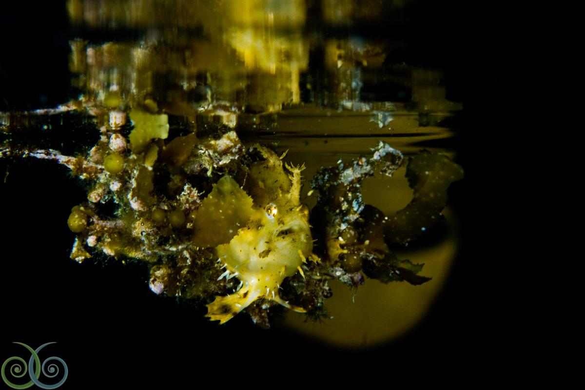 MER.album.night.1.sangut.santoso.jpg