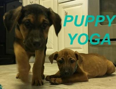 Puppy Yoga.jpg