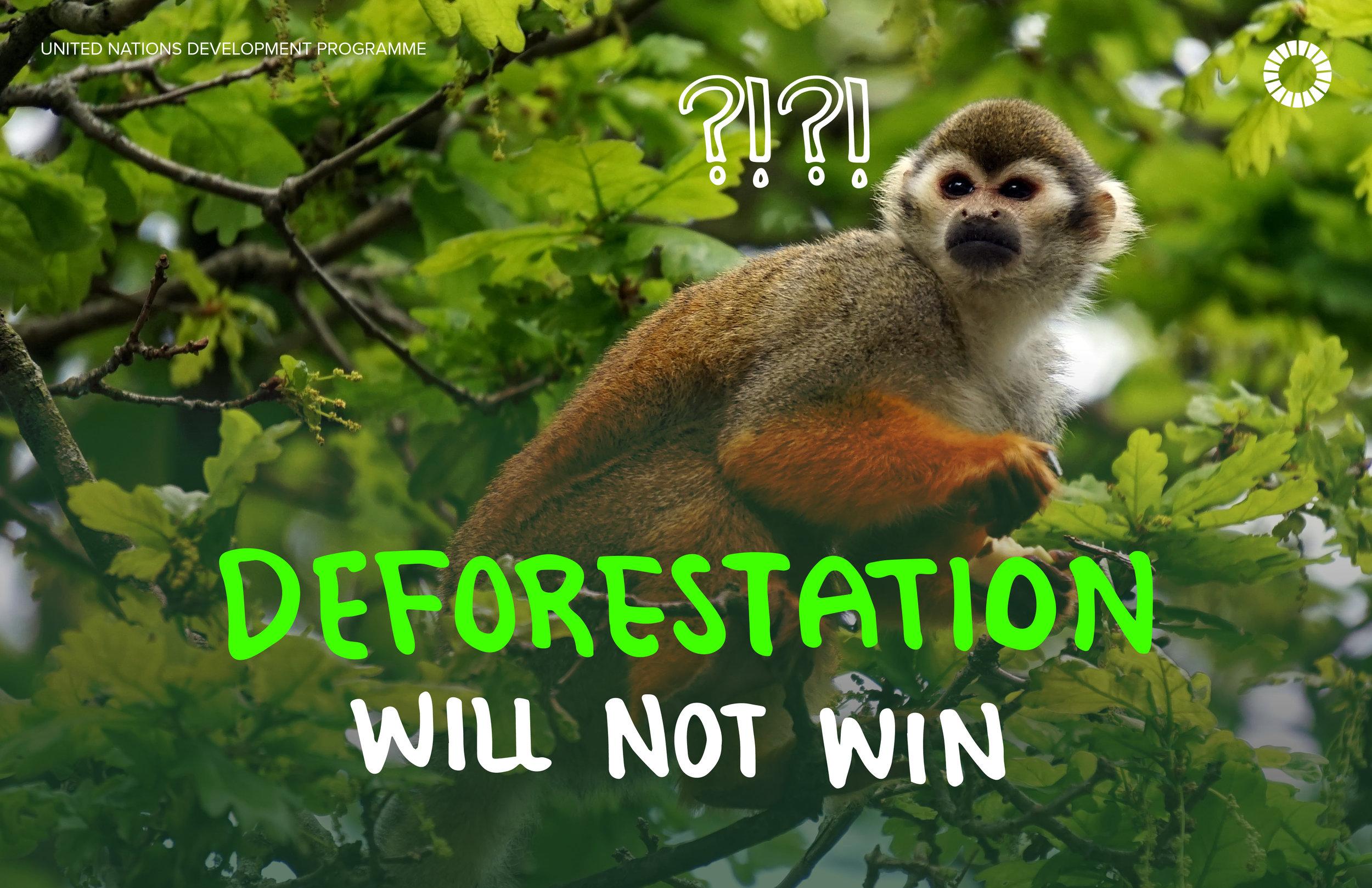 10. Deforestation.jpg