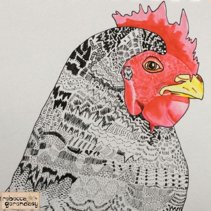 Barred-Rock-Chicken_Rebecca-Gerendasy
