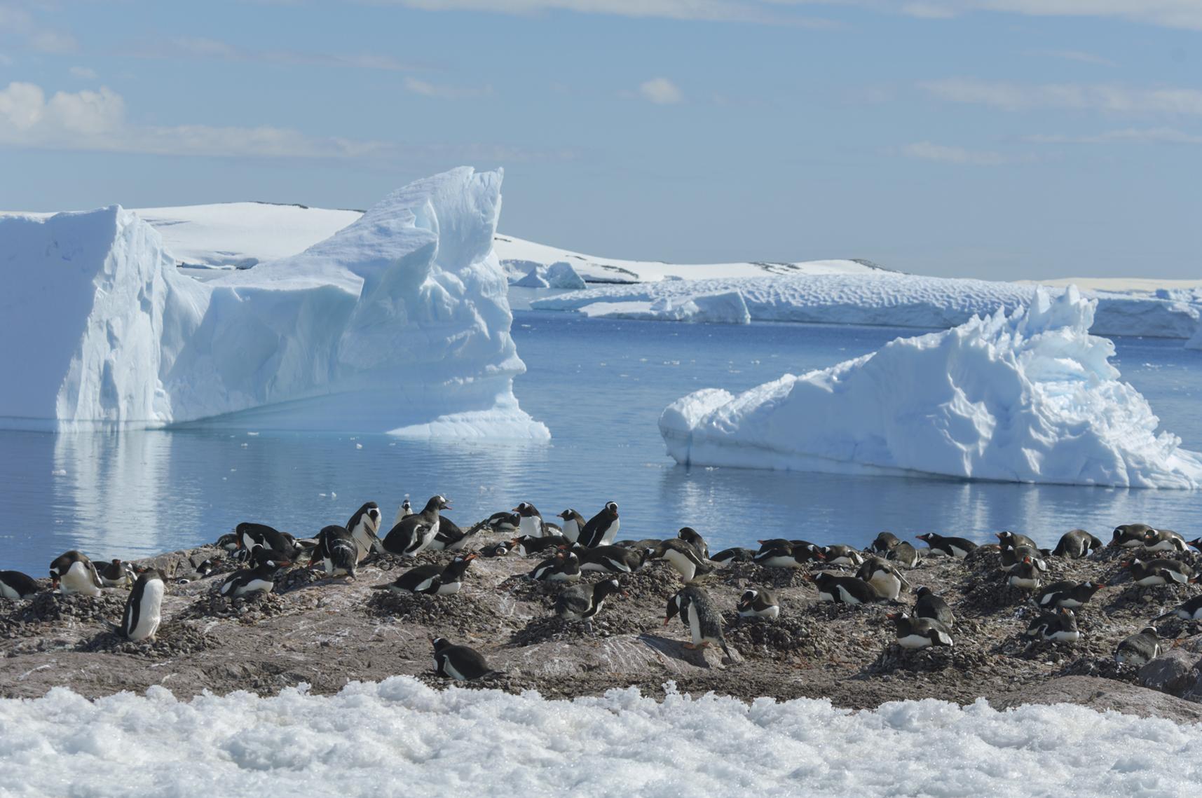 Cuverville Islands, Antartica. 2005