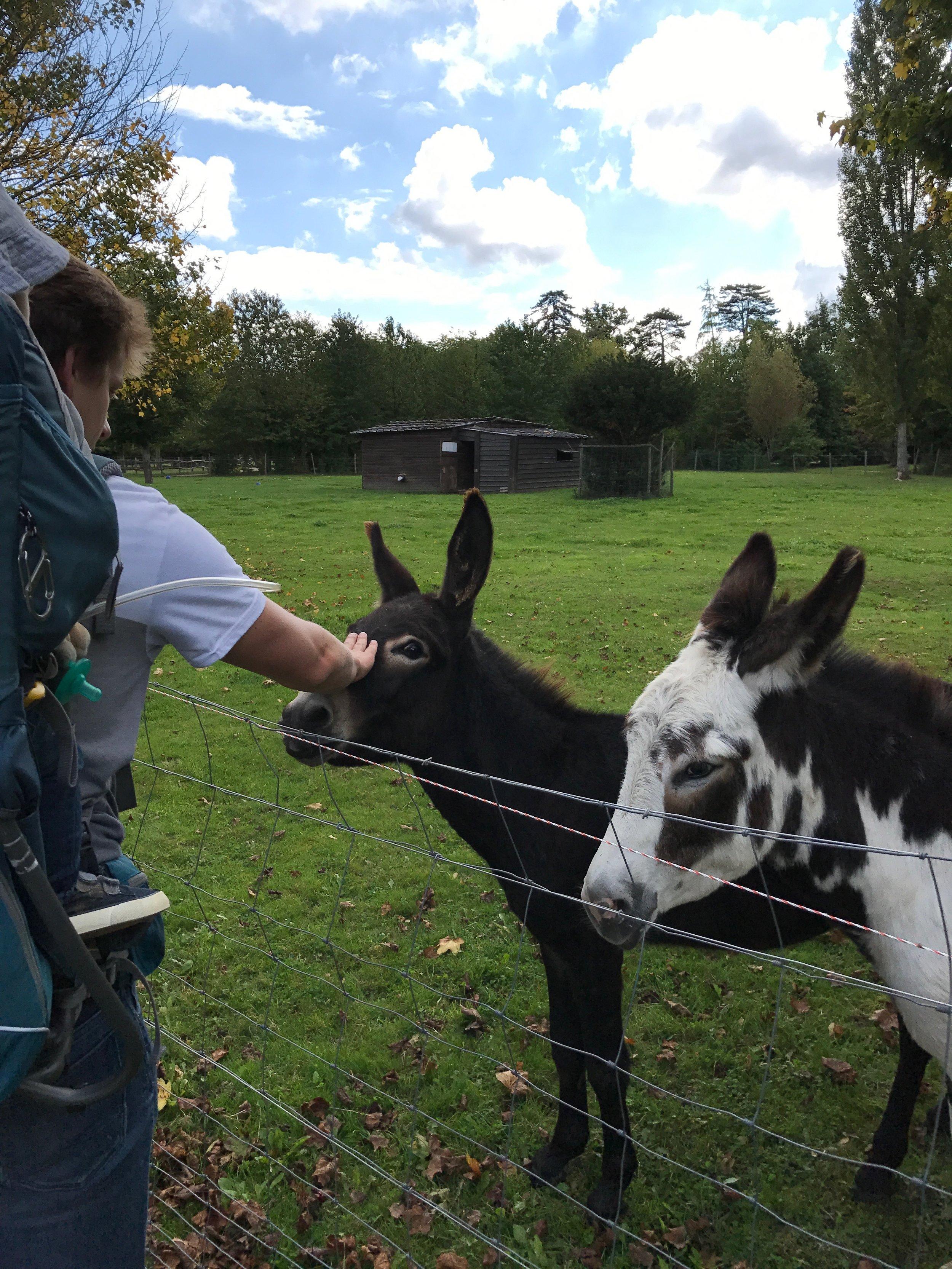parisian donkeys.