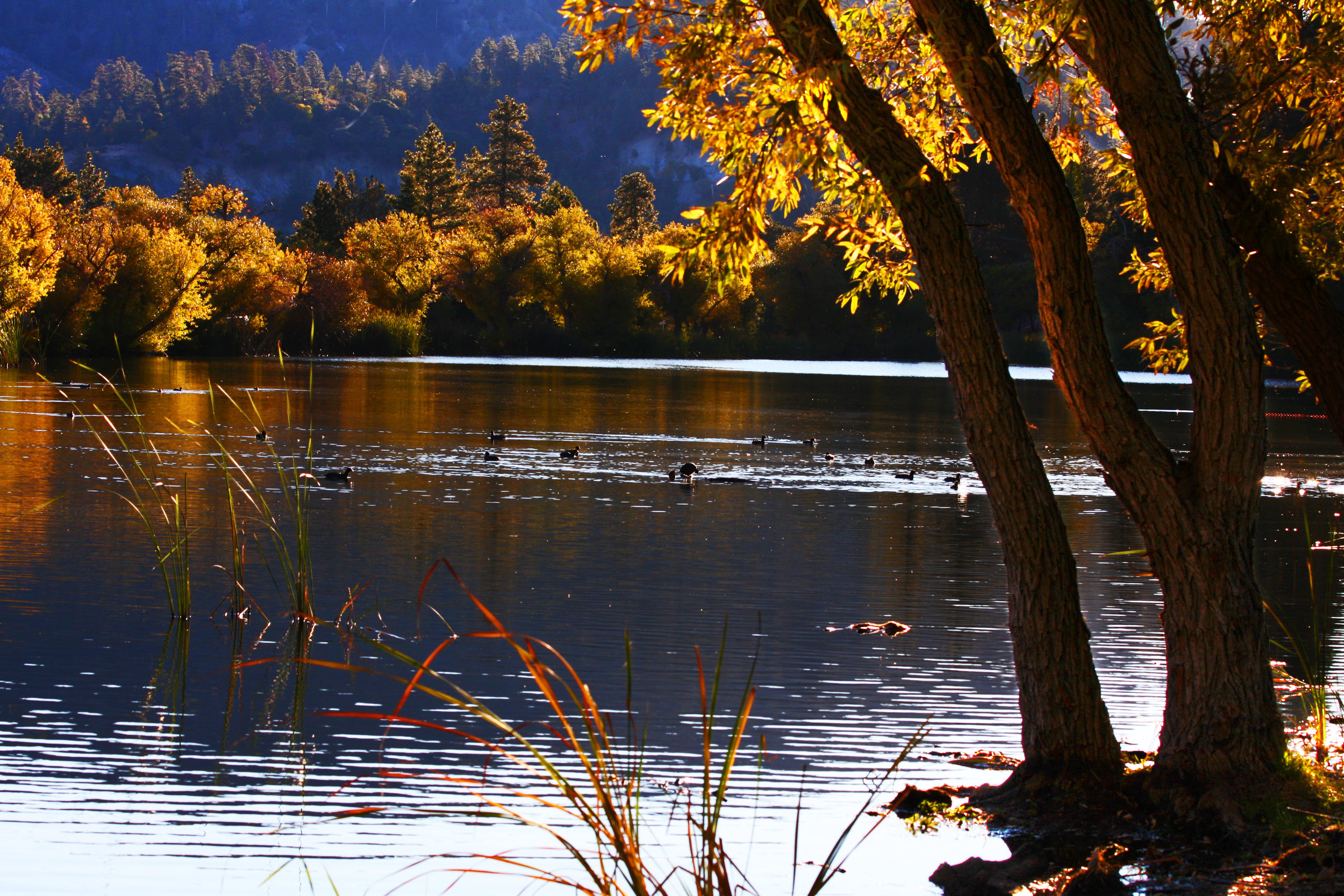 Jackson Lake, Wrightwood, CA