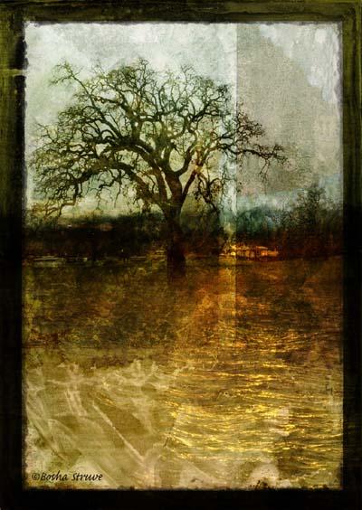 """Bosha Struve -""""Lone Oak In A Flooded Field"""""""