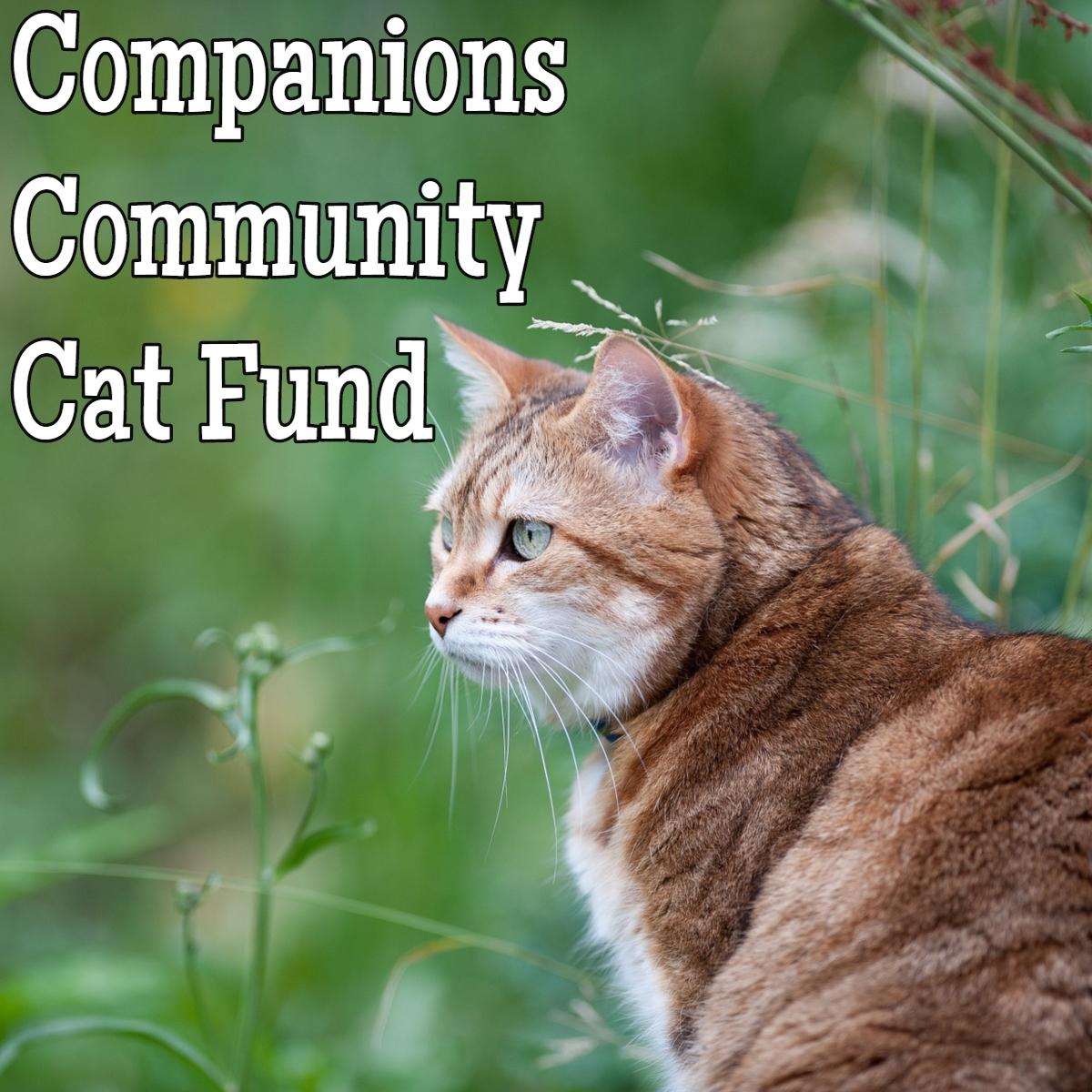 Companions Cat Fund .jpg