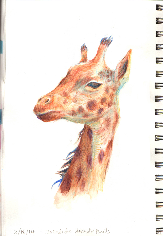 Melancholy giraffe