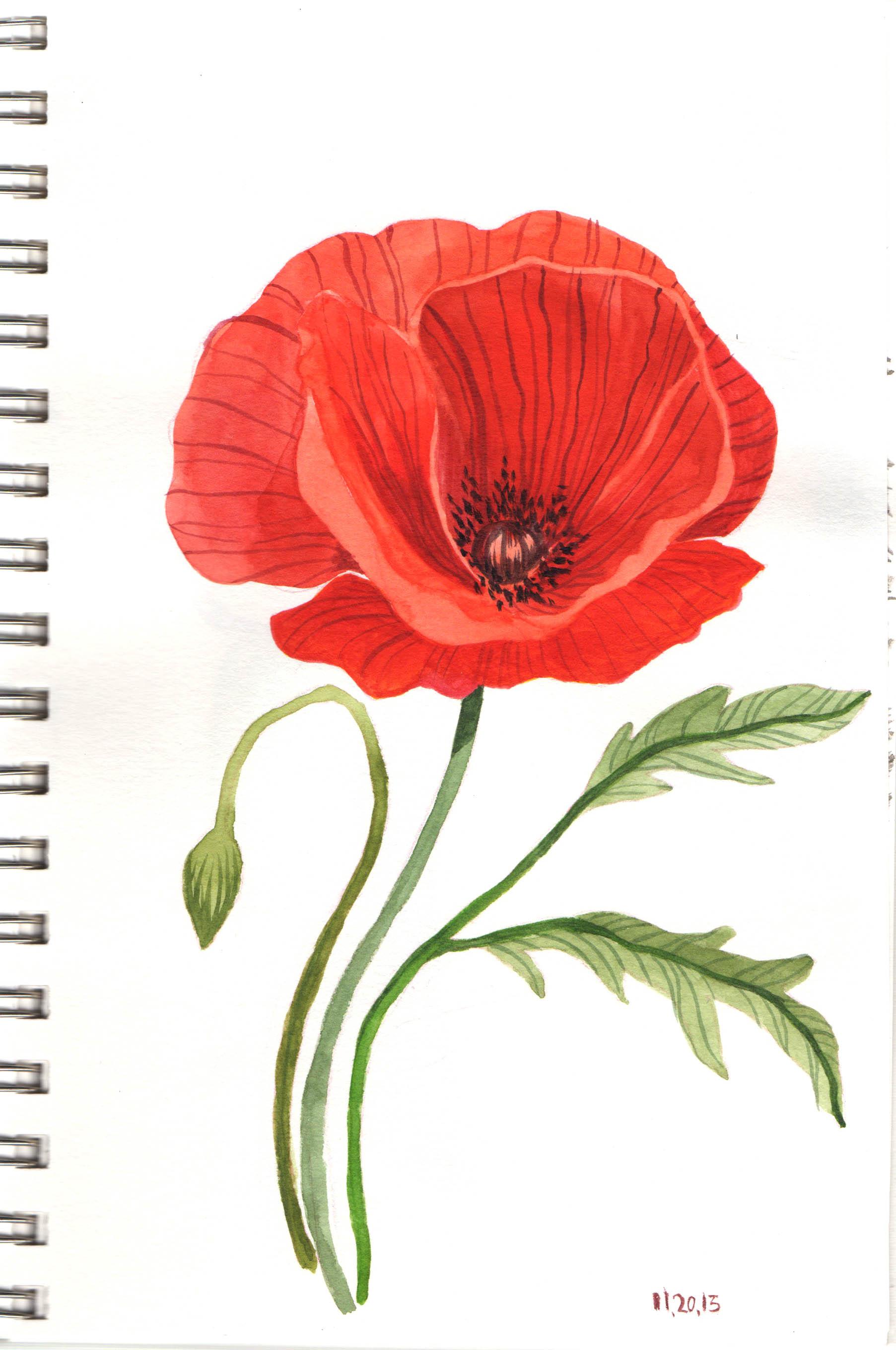 Gouache poppy