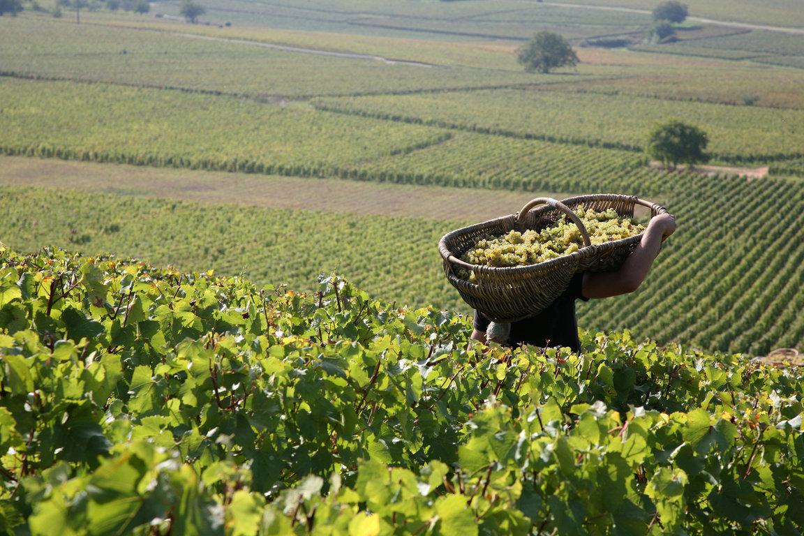 harvest-image-moyen.jpg