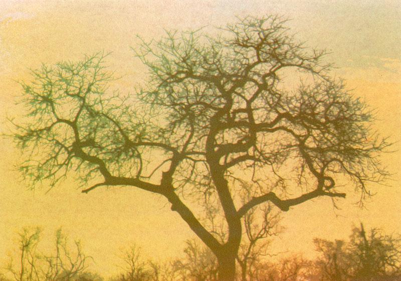 JeanneHauser_AfricanSunset1_sml.jpg