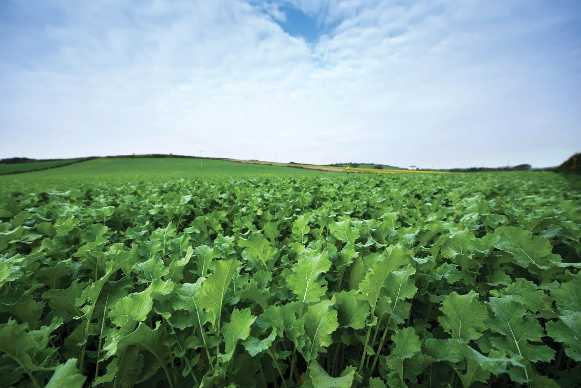 Benefits of crop aid foliar